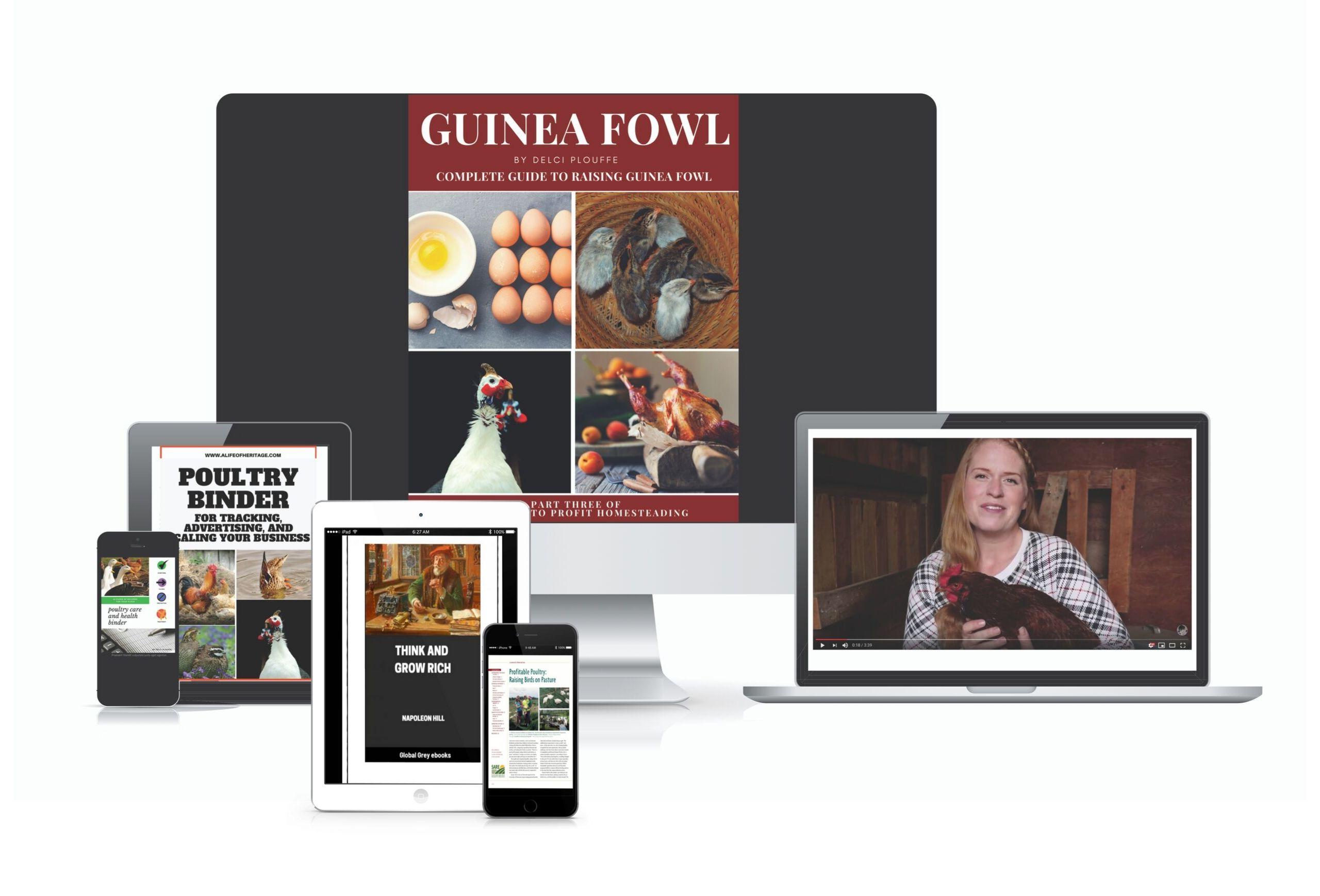 Guinea Fowl And Bonuses